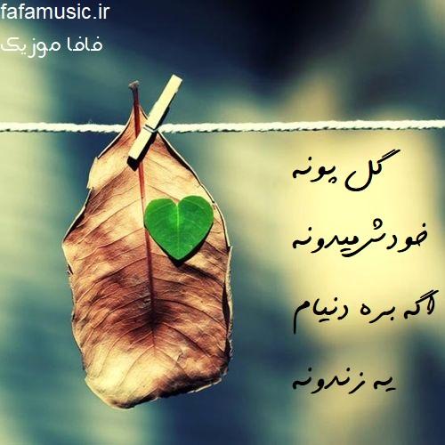 گل پونه محسن ابراهیم زاده